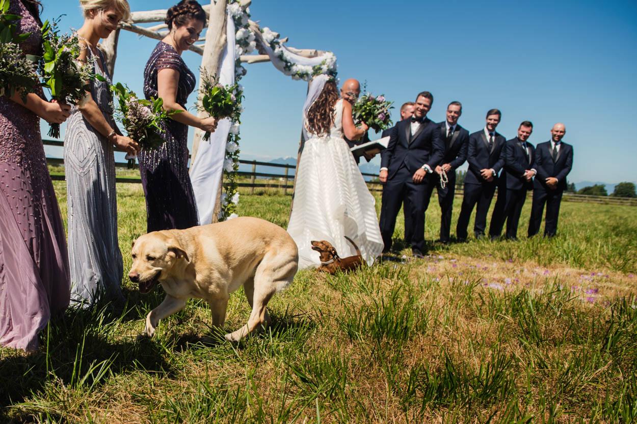 Funny dogs at a wedding // Nicole & Jamie's Wedding held at the barn Roddick's Farm // Delta, British Columbia // Victoria & Vancouver Wedding Photographers FunkyTown Photography // www.funkytownphotography.com