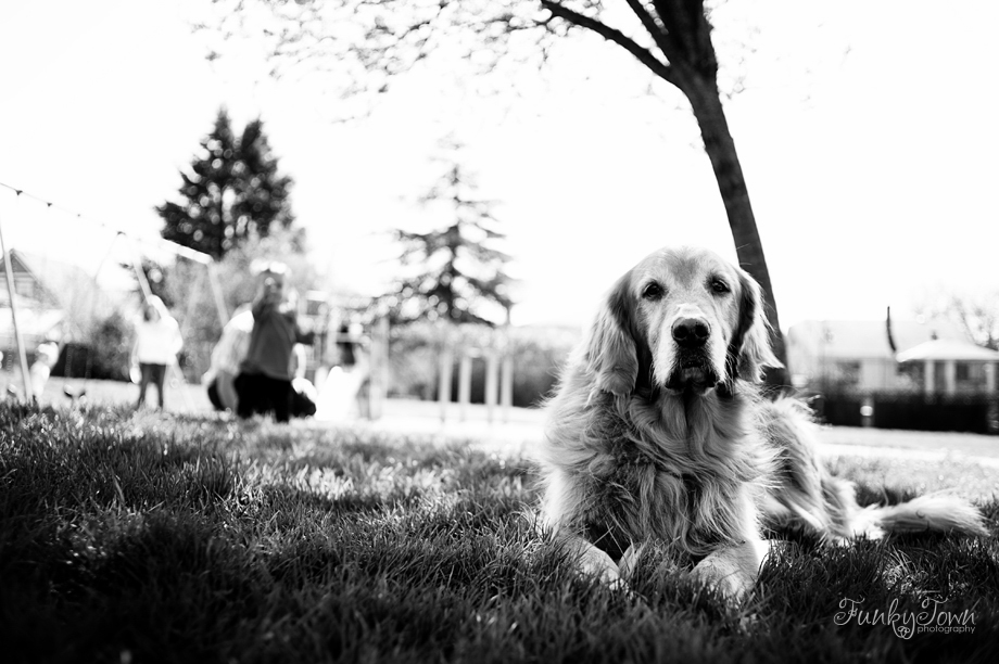 Pet and family Portraits Victoria BC